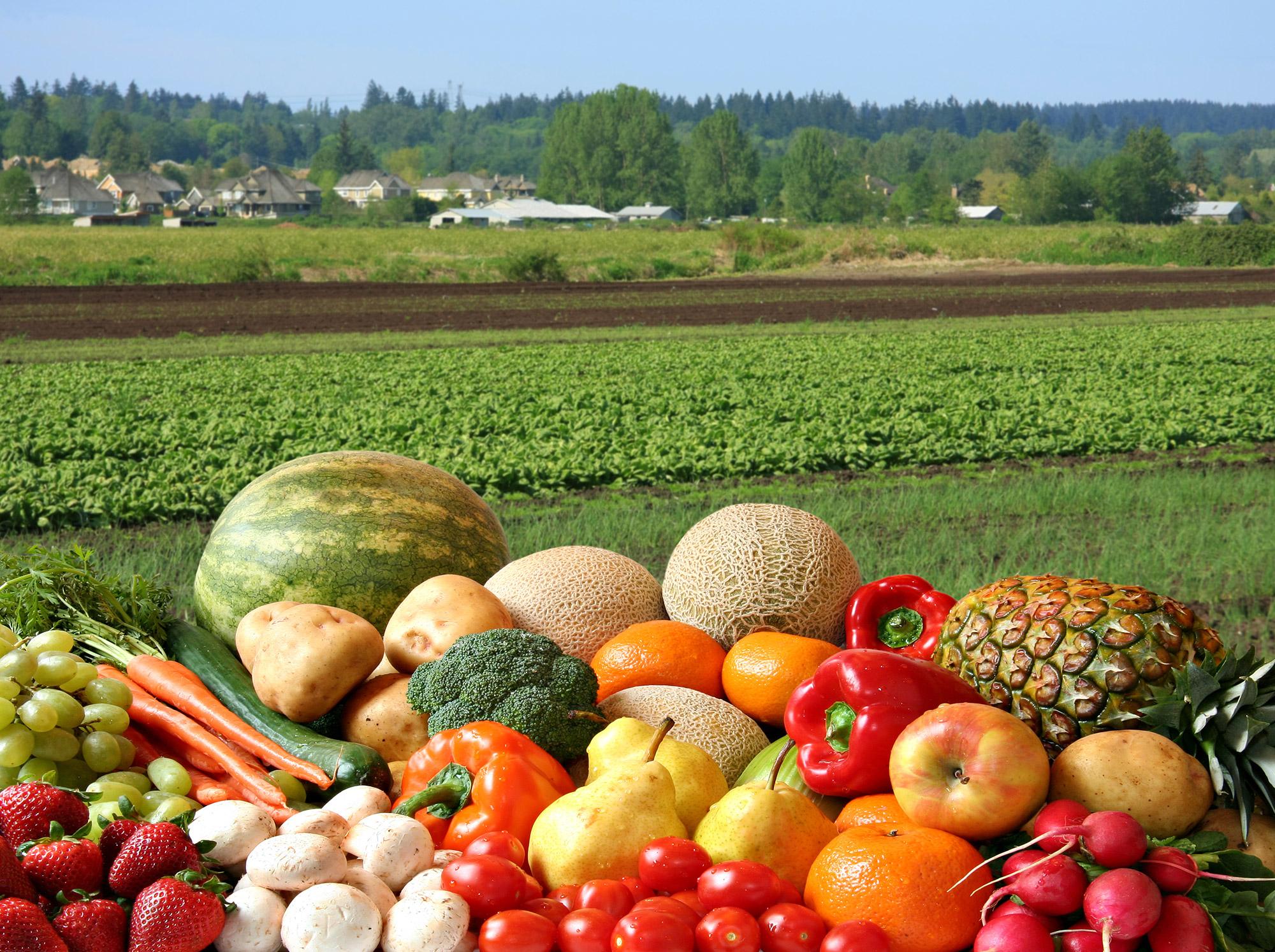 Field Supplies Ltd Fruit
